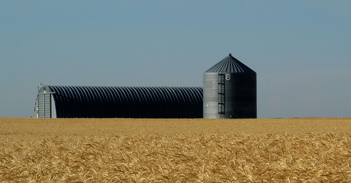 A large gray rectangular metal building with a round silo at one end sit alone in a field of golden wheat under a cloudless blue sky.