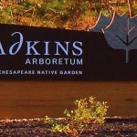 A brown wooden sign with a large leaf symbol reads Adkins Arboretum