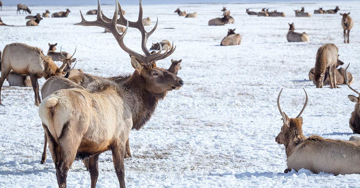 featureimg-nationalelkrefuge