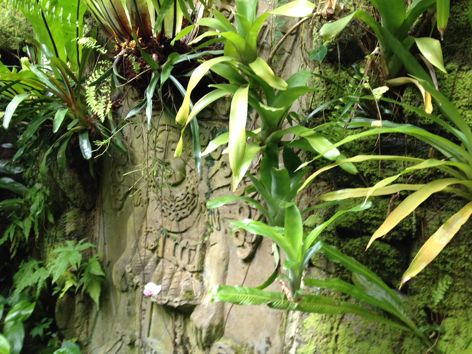 Leafy ferns surround a face carved into a stone wall